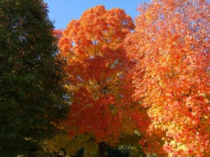 Esplendorosos árboles con hojas otoñales