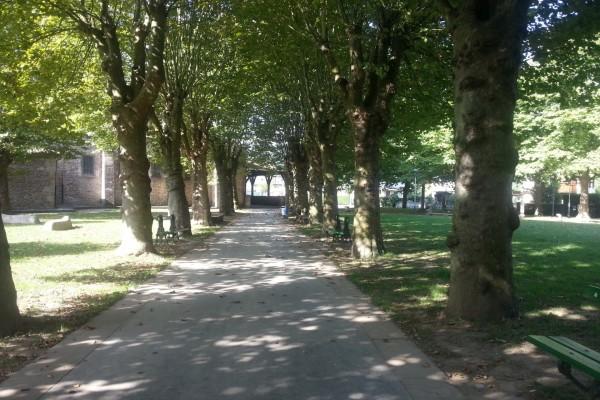 Camino entre árboles