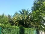 Palmeras y árboles al otro lado de la vaya