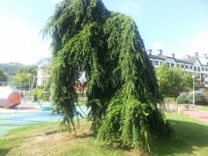 Un árbol doblado en el parque