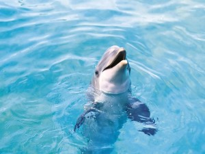 Un delfín sacando la cabeza del agua