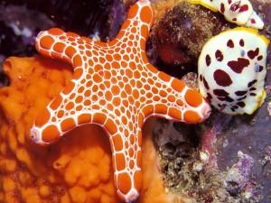 Postal: Una estrella de mar de color naranja