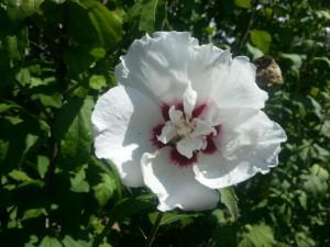 Una gran flor blanca iluminada por el sol