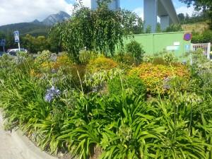 Plantas y arbustos a la llegada del otoño