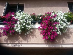 Postal: Bonitas flores en un balcón