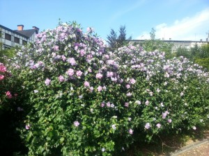 Arbusto lleno de flores