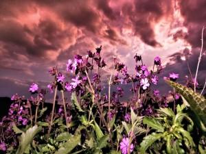 Flores silvestres de color púrpura