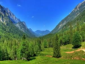 Postal: Hermoso valle cubierto de pinos