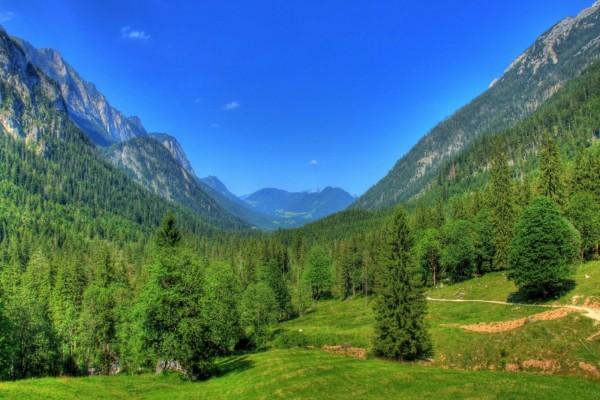 Hermoso valle cubierto de pinos