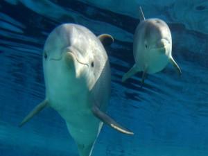 Delfín y su cría bajo el agua