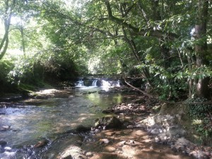 Pequeñas cascadas en un río