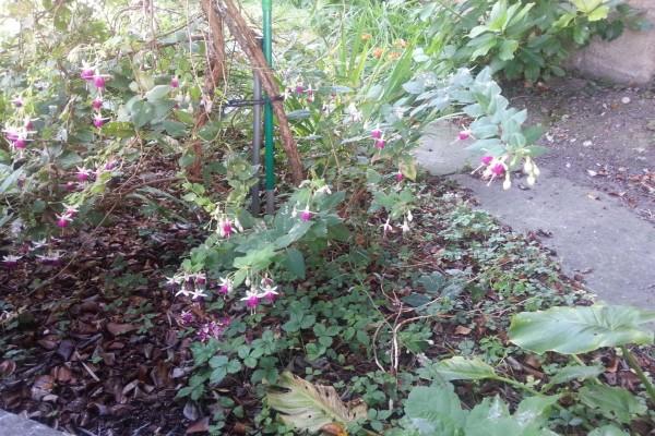 Pendientes de la reina de color rosa y blanco