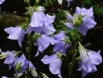 Magníficas flores color lila