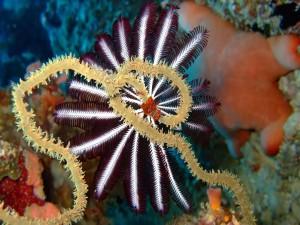 Postal: Animales marinos en el fondo del océano