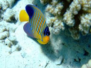 Un bonito pez de llamativos colores