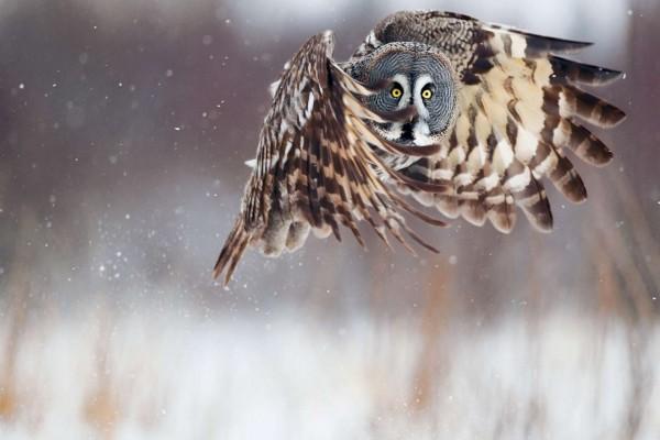 Un carabo batiendo sus alas