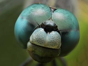 Cara de un insecto vista en aumento