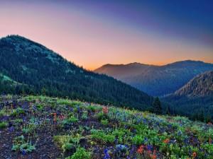 Flores silvestres y pinos en las montañas