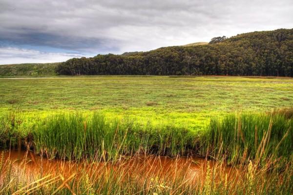 Arroyo entre plantas verdes