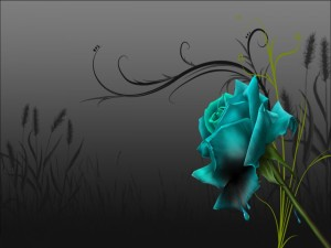 Una rosa azul perdiendo el color