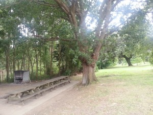 Un roble junto a mesas de madera y una parrilla
