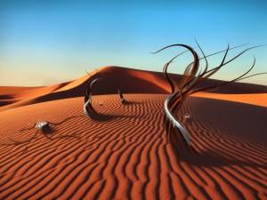Postal: Árboles en la arena del desierto
