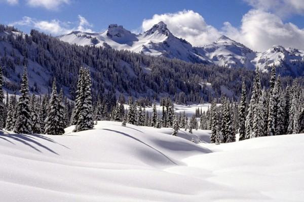 Pinos sobre una brillante nieve