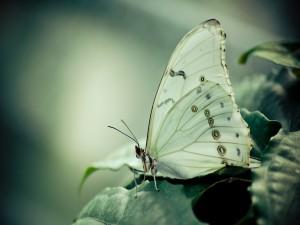 Una mariposa con alas blancas