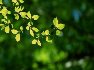 Postal: Hojas iluminadas por el sol