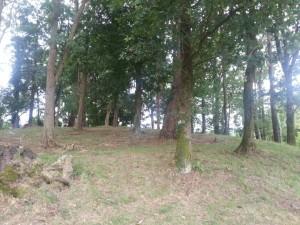 Postal: Bosque de acacias