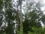 Grandes árboles y plantas