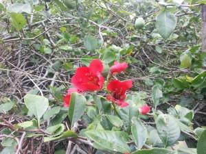 Flores rojas entre ramas y hojas