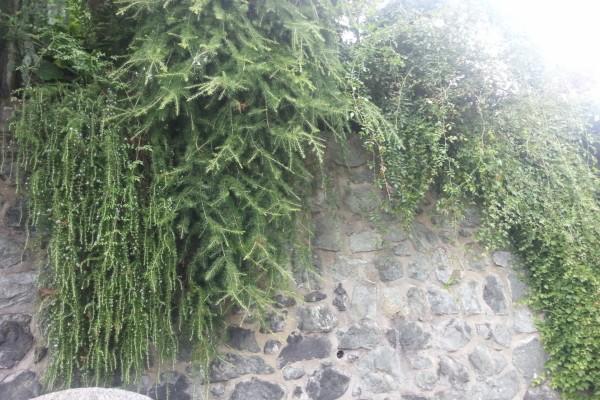 Plantas verdes sobre el muro de piedra