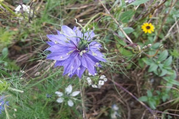 Extraña flor lila