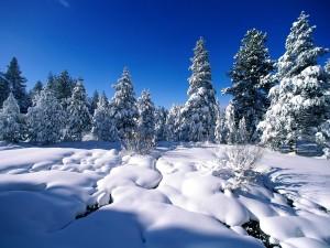 Gruesa capa de nieve iluminada por el sol