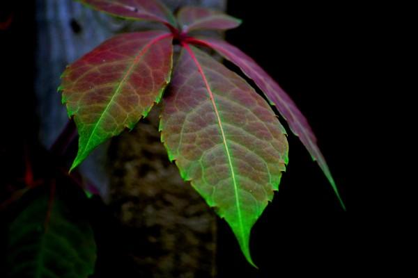 Hojas con el borde de color verde