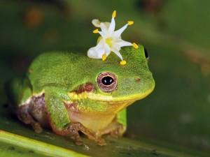 Postal: Flor blanca sobre la cabeza de una rana
