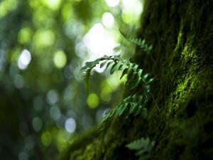 Helecho junto al tronco de un árbol