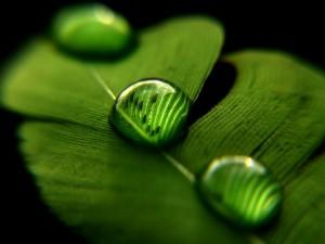 Tres gotas de agua sobre una hoja verde
