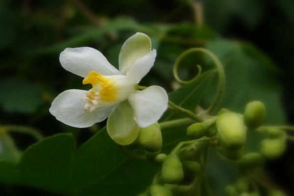 Delicada y bonita flor blanca