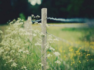 Flores silvestres junto a una alambrada