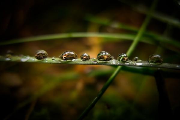 Gotas de agua sobre una brizna de hierba