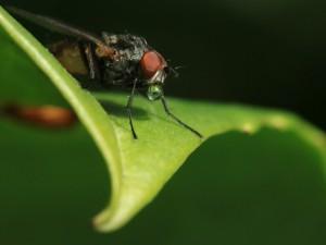 Gota de agua en la boca de una mosca