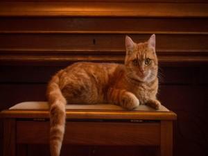 Gato posando sobre una mesa