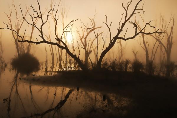 La luz del sol entre las ramas desnudas de los árboles