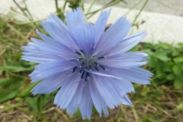 Gran flor de color lila