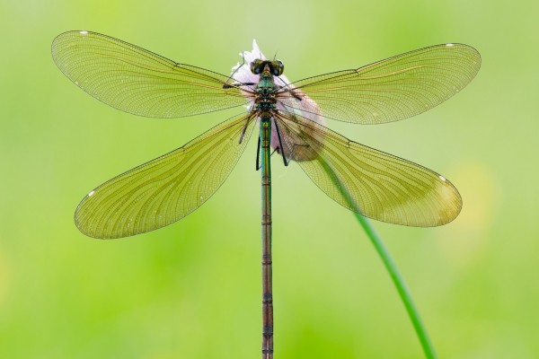 Una libélula posada en una flor