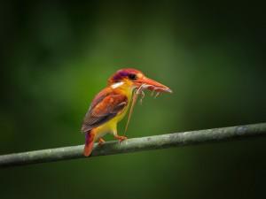 Colorido pájaro con una lagartija en el pico