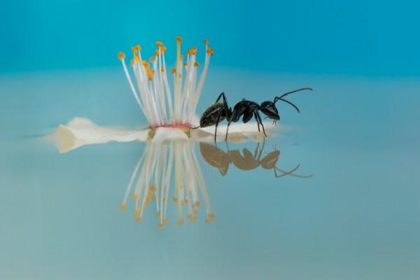 Una flor y una hormiga en el agua