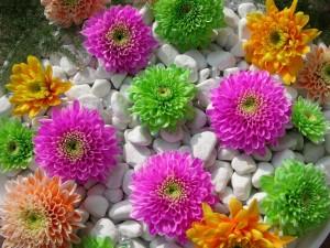 Flores de varios colores entre guijarros